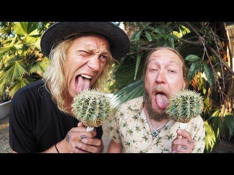 Cactus Popsicle!