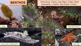 Nekton, Benthos, and Plankton