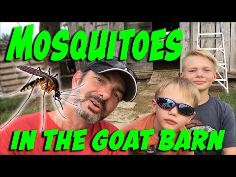 Mosquito Control in the Goat Barn