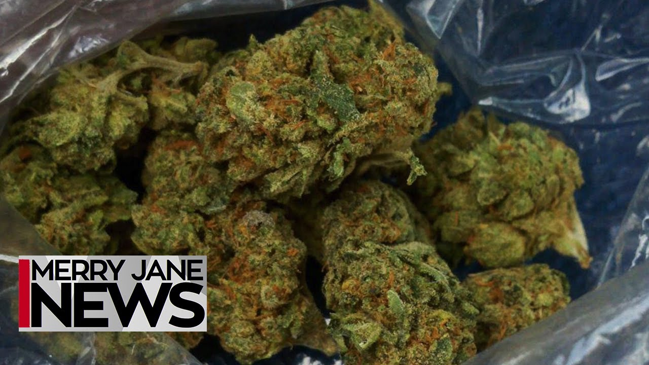 The Best Ways to Preserve Your Weed | MERRY JANE News