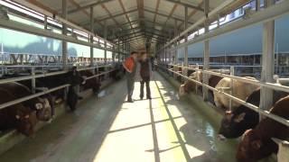Smartbeef − ce programme intelligent facilite le travail des engraisseurs de bovins