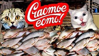Случаи на рыбалке ПРИКОЛЫ НА РЫБАЛКЕ 2021 ТРОФЕЙНАЯ РЫБАЛКА приколы на воде Я РЖАЛ ДО СЛЁЗ
