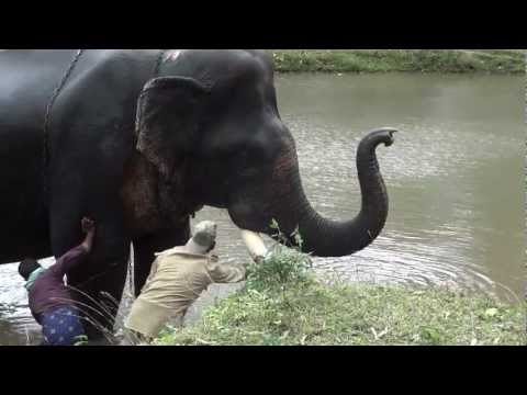 How to Wash an Elephant