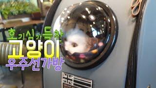 [까까캔디] 고양이 우주선 타고 외출을 했어요 ㅡ우주선 가방ㅡ