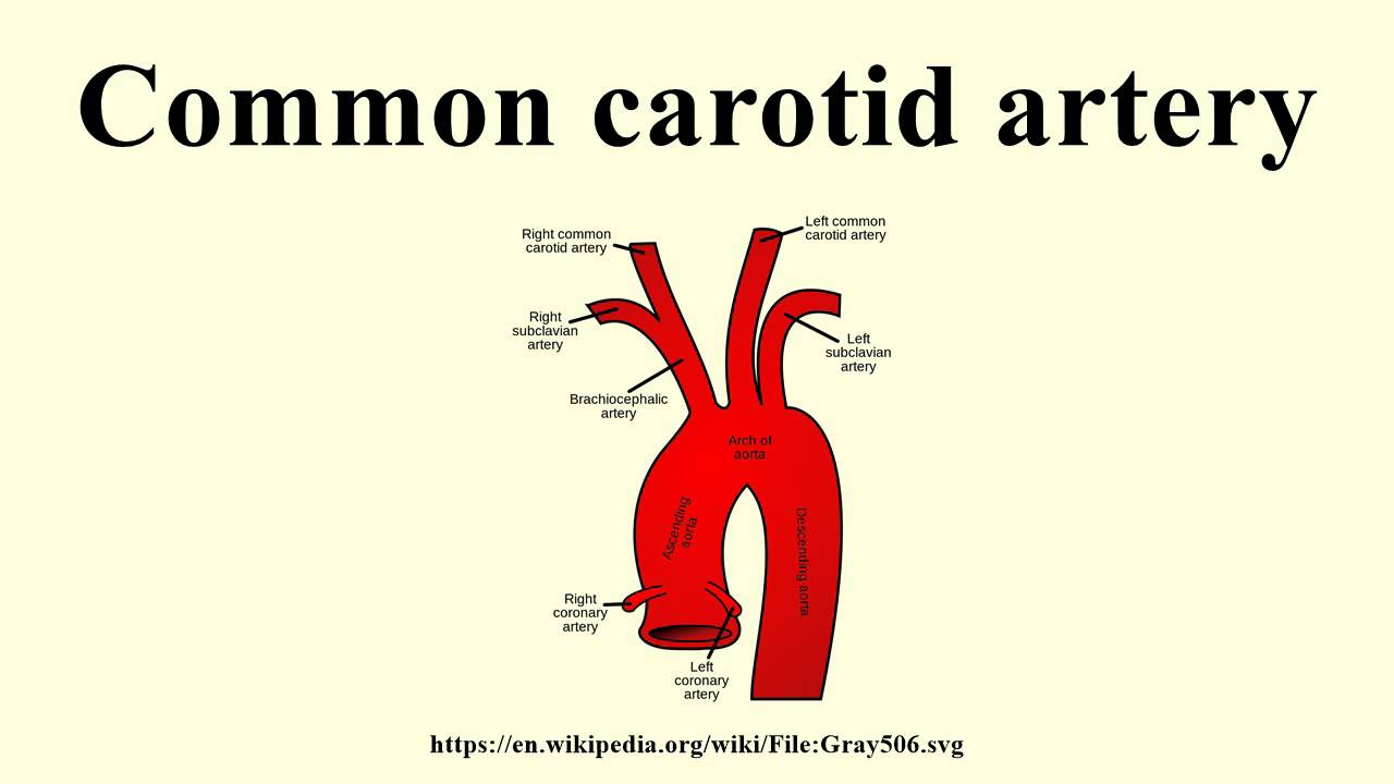 Common carotid artery - YouTube