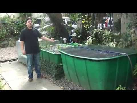 Aquaponics Philippines, MADE Cascade System with Filtration