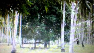 PALAWAN BEACH FRONT FOR SALE located in QUEZON ARAMAYWAN