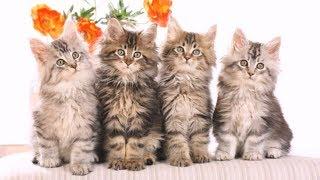 Смешные коты фото/Маленькие смешные котики фото!