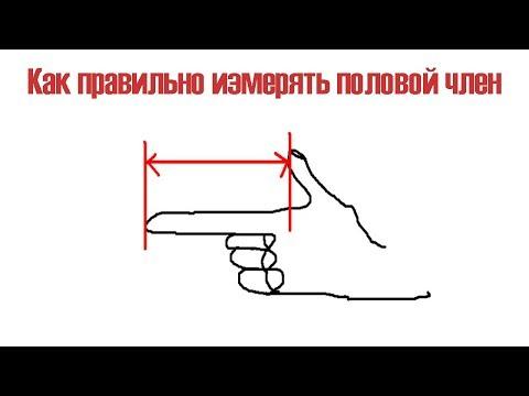 Как правильно измерить длину полового члена