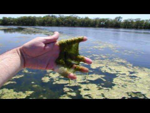 Algae, Blue green bacteria, Nebraska, Pawnee Lake State Recreation Area