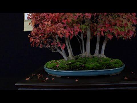 Best of the European Bonsai San exhibition