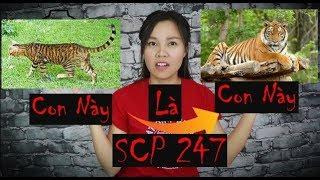 SCP 247 - Hổ Giả Mèo Để Ăn Thịt Người -Và  Nút Bạc Đã Về Kênh