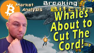 Whale Alert!  Will This Man Kill The Price of Bitcoin?!  Regulated Bitcoin Futures Coming In July!