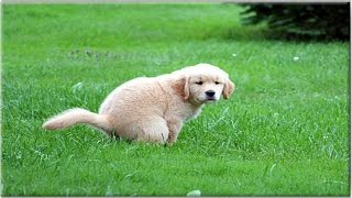 **How To Potty Train A Puppy - FREE Course ♥ Sign UP HERE****