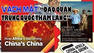 """Vạch mặt kẻ tham lam tàn phá: """"Đạo quân Trung Quốc thầm lặng"""""""