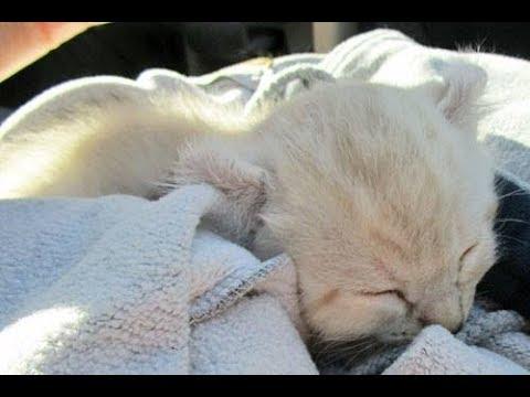 New Kitten Haul!