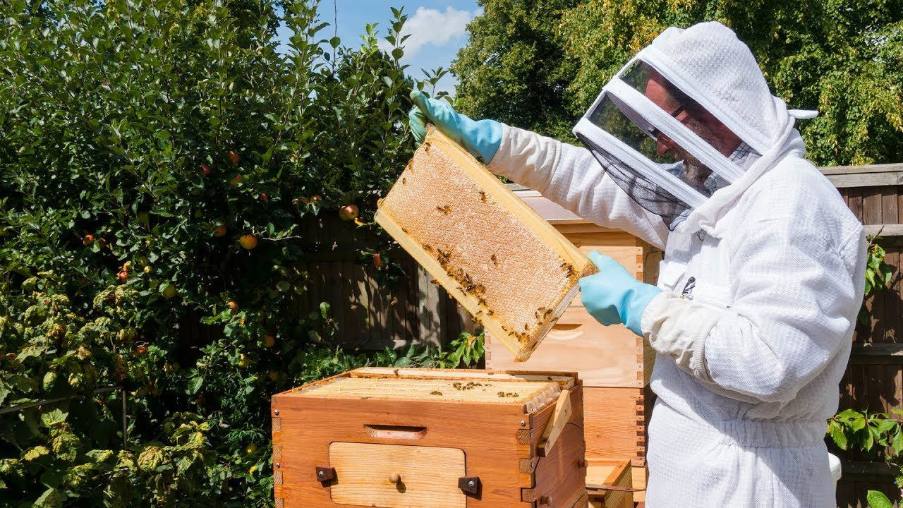 Flow Hive In The Uk Beekeeping Gardening And Work Life Balance
