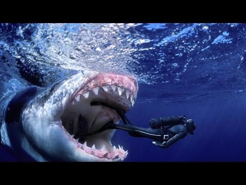 Top 5 World's Biggest Sharks - YouTube