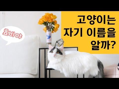 고양이는 자기 이름을 알까? - 엄마편