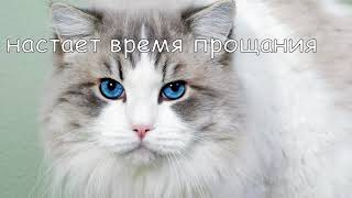 грустное видео про кошку