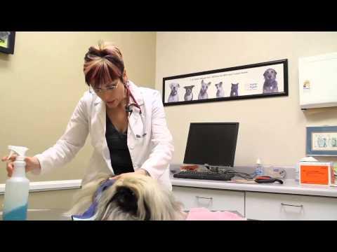 How To Bathe A Dog With Waterless Shampoo