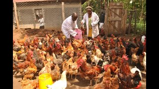 MILLIONAIRE KIENYEJI CHICKEN FARMER SUCCESS STORY. PART 1