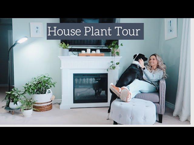 House Plant Tour