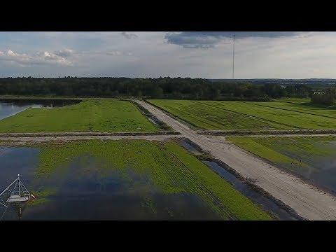 How Hurricane Irma Hurt Florida Farmers