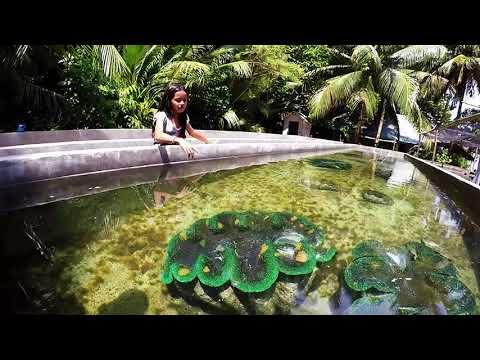 Camiguin Island Philippines - Giant Clam Sanctuary