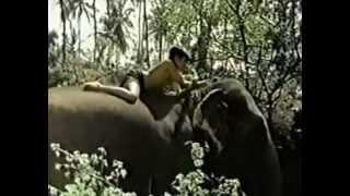 El niño y el Elefante pelicula completa Cristiana 40min