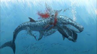 Cá voi sát thủ ăn thịt cá mập trắng   Thế giới động vật