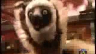 zoboomafoo cap cachorros 1 3