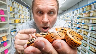 WE HATCHED TWIN BALL PYTHONS!! | BRIAN BARCZYK