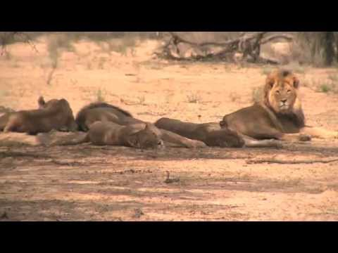 African safari tours highlights (Kenya, Tanzania, South Africa, Botswana, Uganda, Zambia, Zimbabwe)