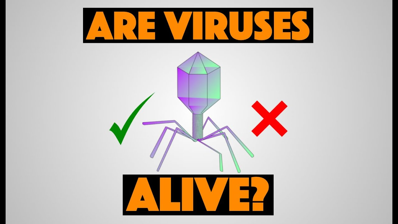 are viruses alive Whether viruses are alive or not is a big question in the science community scientists agree that viruses pass a couple of the requirements for life for example, viruses are able to respond to their environment.