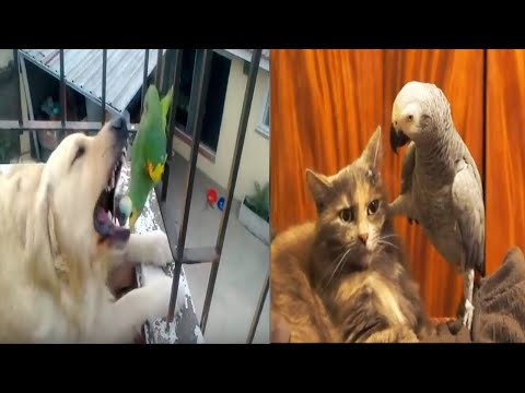 Birds Watching For Cats Dogs Kids Cute Parrot Doing Funny Things Talking Singing Dancing Live 17