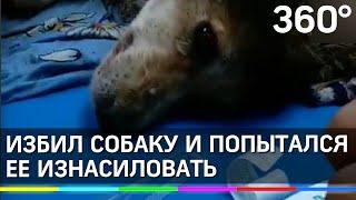 Попытался изнасиловать собаку и пробил ей голову. Жестокая история из Красноярска(В Красноярске мужчина избил молотком собаку, а перед этим, вполне возможно, изнасиловал. Жуткие кадры опубликовали волонтёры центра