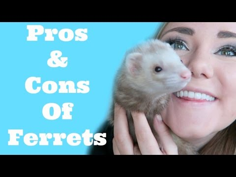 WATCH THIS BEFORE BUYING A FERRET!!