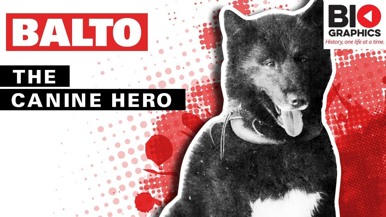 Kaiser Bonaparte Tapijt Balto The Canine Hero