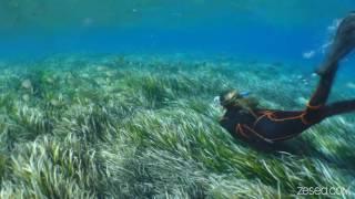 Snorkeling à Port Cros