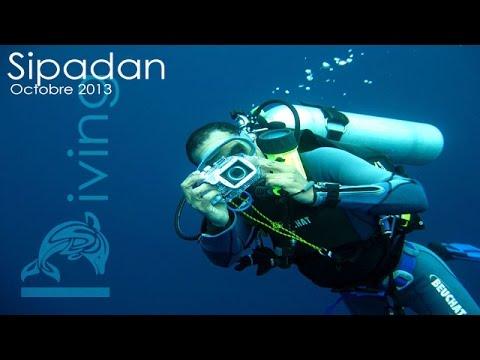 Plongée autour de Sipadan | Diving around Sipadan (Oct. 2013)