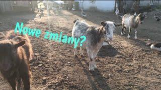 Nowe zmiany?? /Przegląd hodowli zwierząt