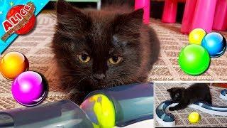 Маленький кошеня підріс, але любить нові іграшки, а Аліс показує свої іграшки:) Передаємо вітання!