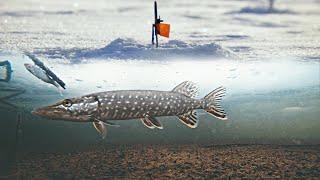 ЭТО МЕСТО КИШИТ ЩУКАМИ! АТАКА ЩУКИ НА ЖИВЦА! Зимняя рыбалка на жерлицы. Подводное видео