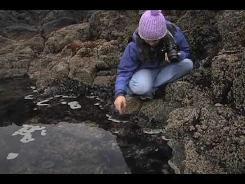 Exploring Oregon's Coastal Tidepools