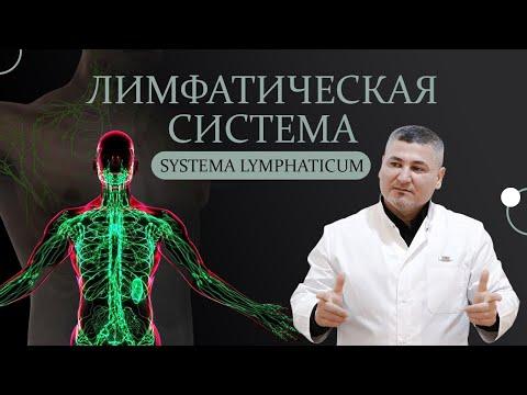 Лимфатическая система.Лимфатические сосуды,узлы.Строение лимфатического узла.