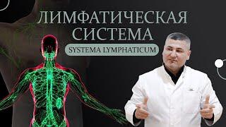 лимфатическая система и лимфатические узлы
