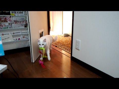 持って来ちゃうユキ - this toy is still living! -