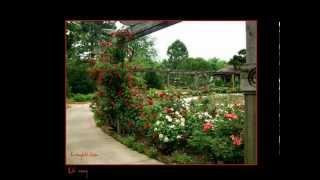 Mon Amie La Rose  -Thanh Lan  -HKL