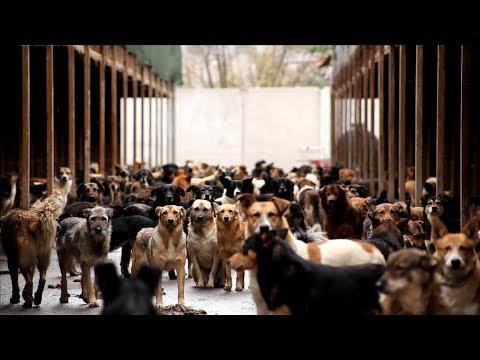 'Каждая собака' -